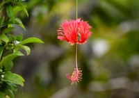 selective focus photography of pin petaled flower