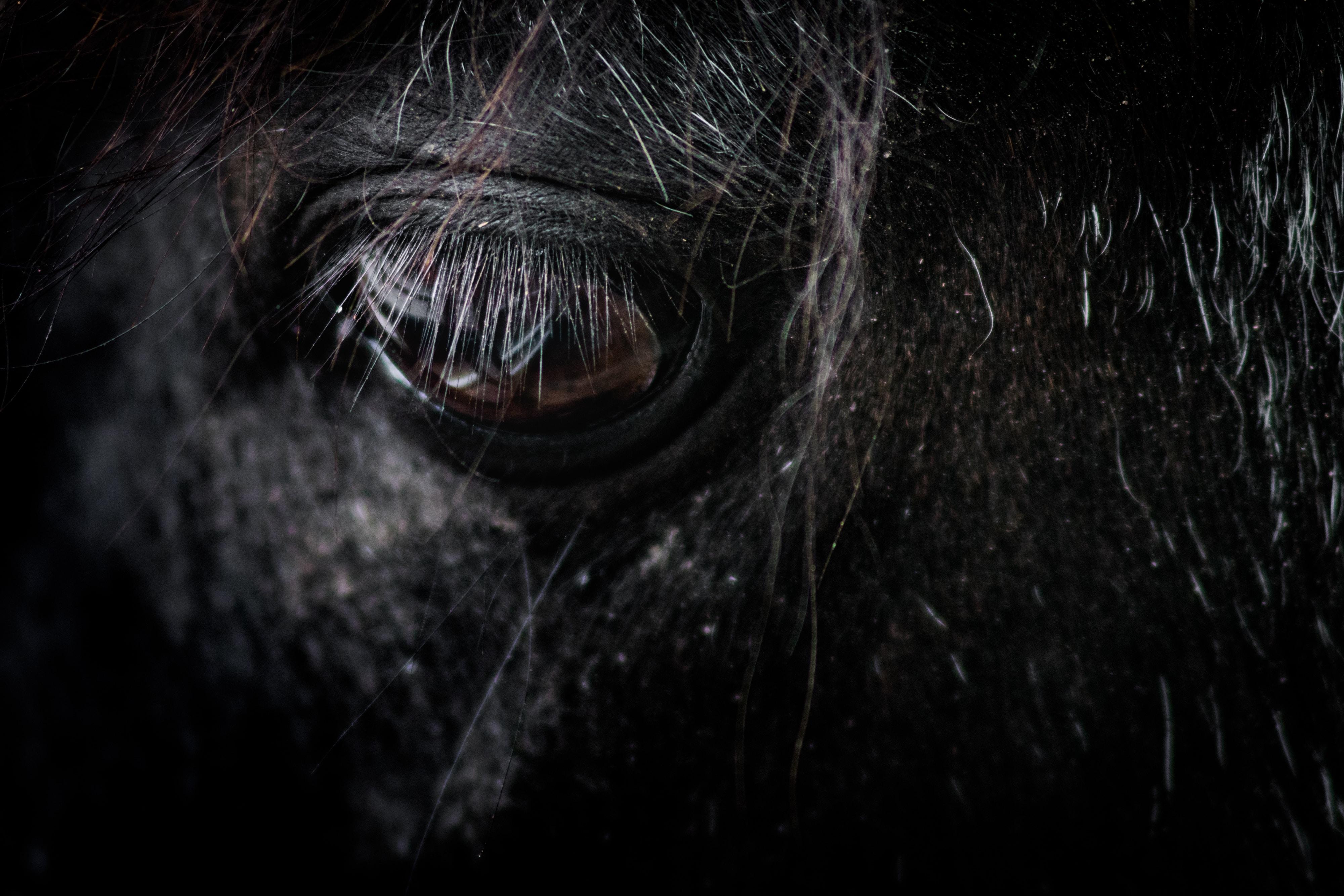 black horse eye