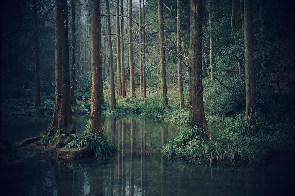 body of water across green woods