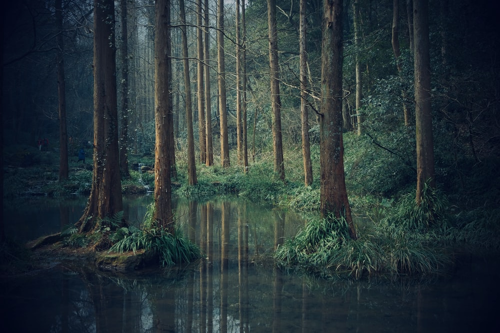 body of water across green woods