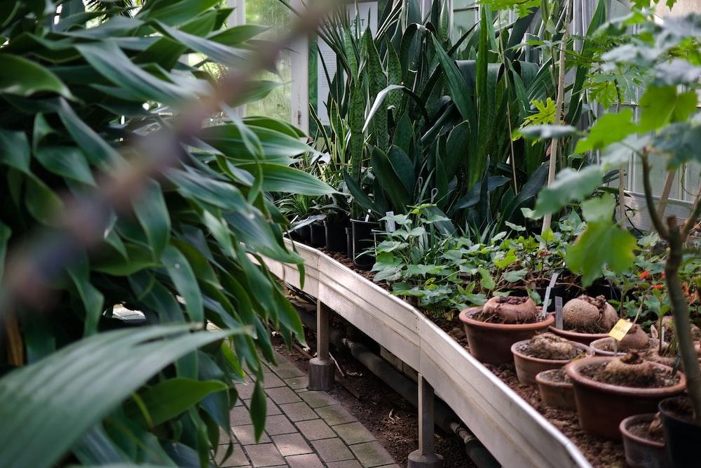 緑の葉の屋外植物