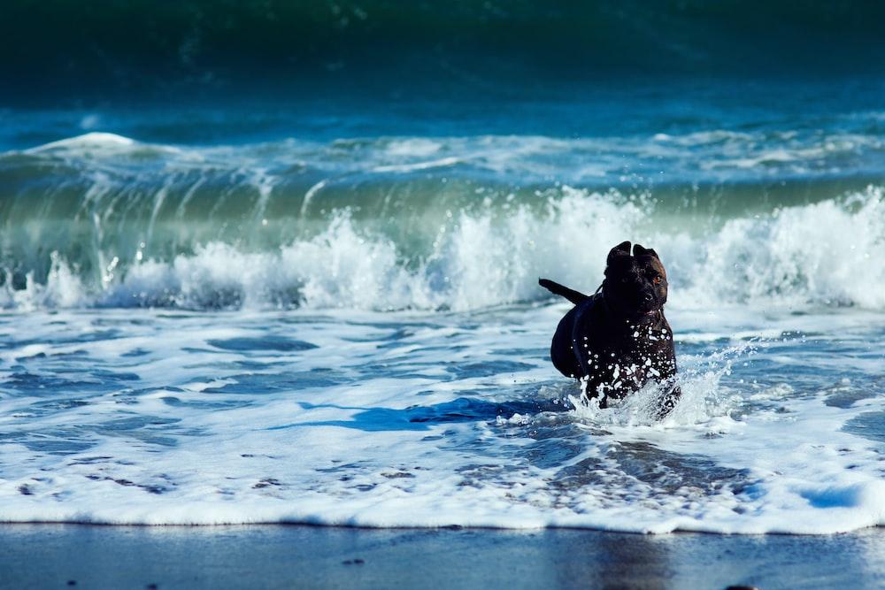 black rocks on seashore