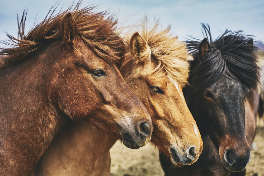 selective focus photography of horses