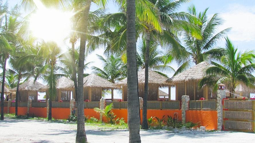 Palm trees in Orlando Florida at Hyatt Regency in Orlando.