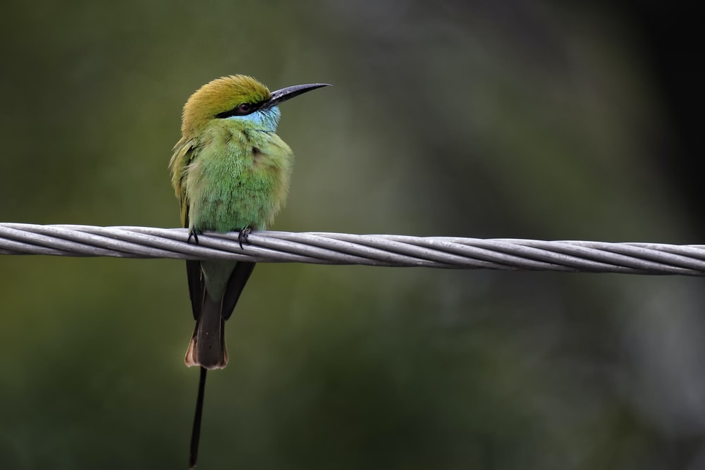 selective focus photography of bird perching on gray rope