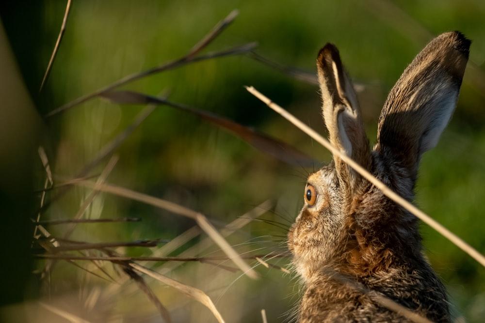 closeup photography of rabbit
