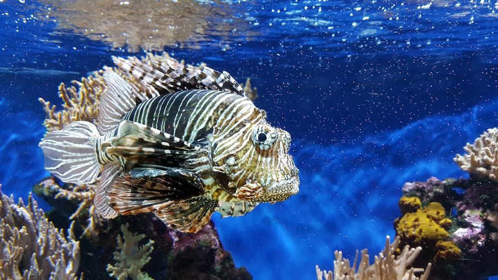 Tiger fish (Foto: Unsplash/ Liona Toussaint)