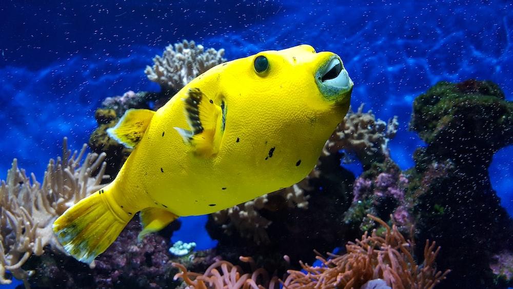 yellow dish under water
