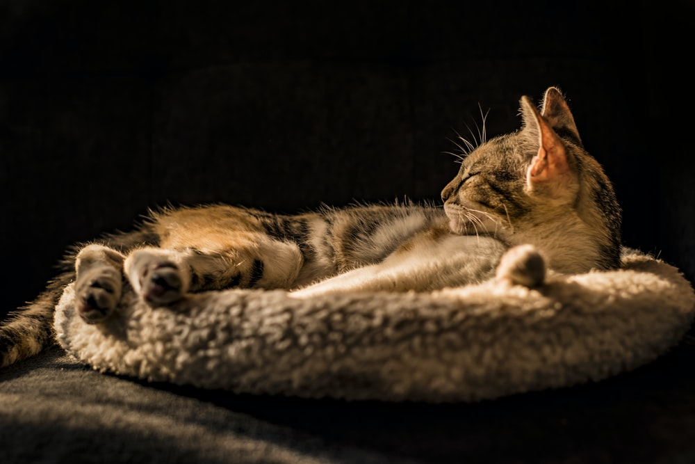 cat lying on gray cat bed