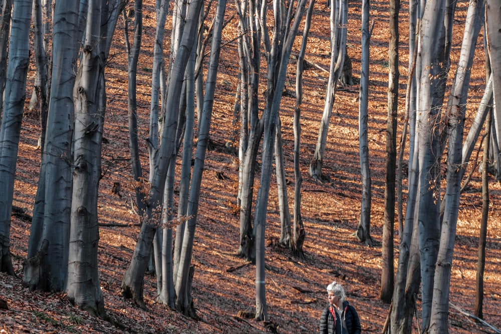woman walking on forest during daytime