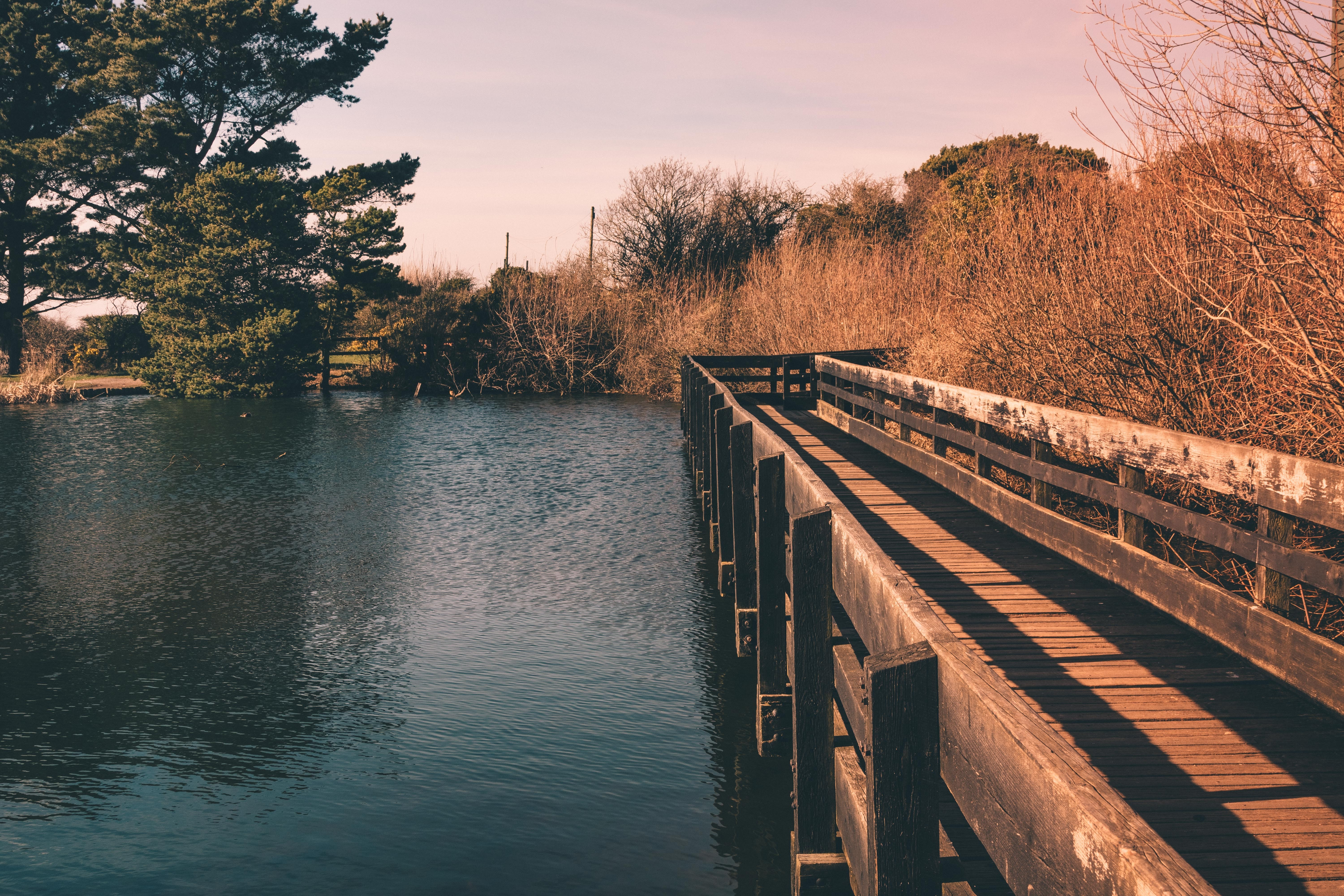 wooden dock over body of water near trees