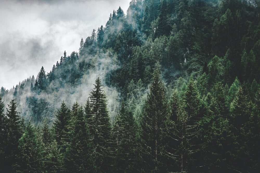 green trees under white cloudy sky