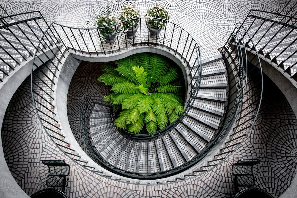 green tree under stair inside building