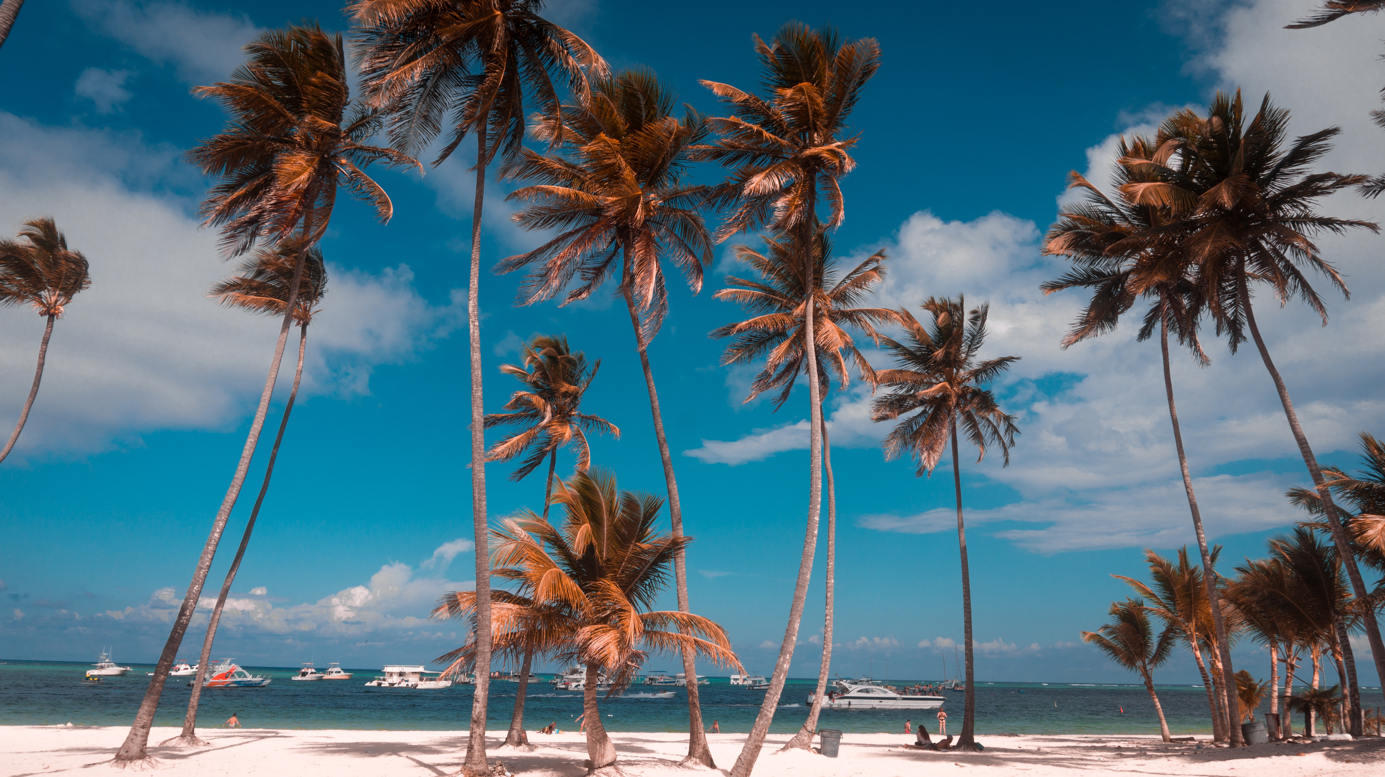 coconut palm trees by the sea during daytime
