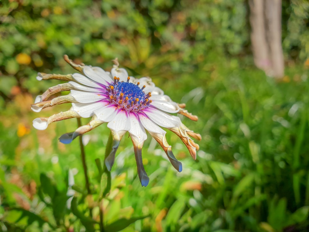 white and purple flowers