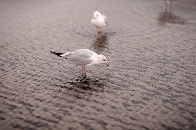gray and white bird
