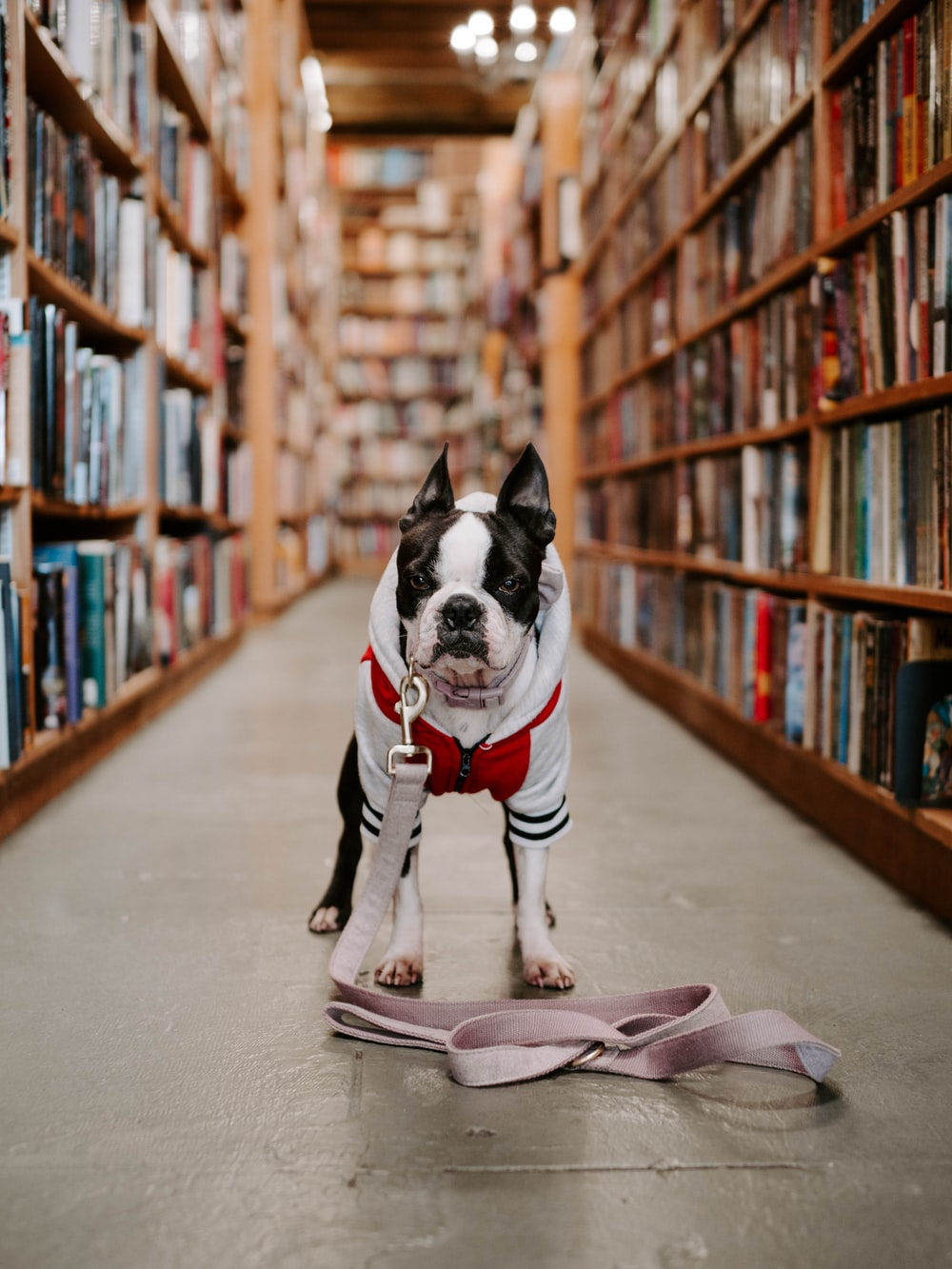 white dog standing between bookshelves