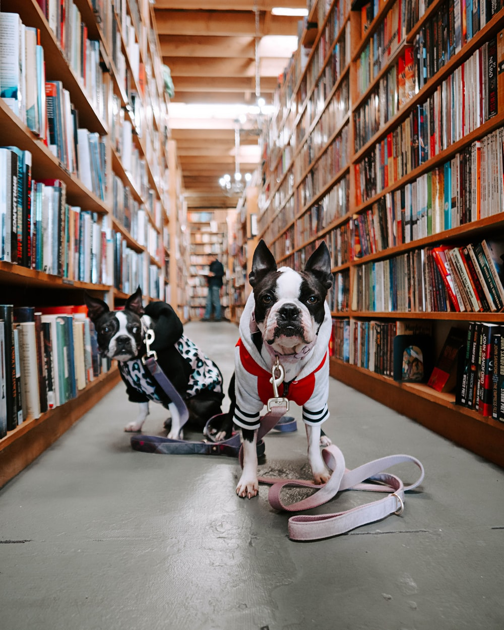 two dogs in between bookshelves inside library