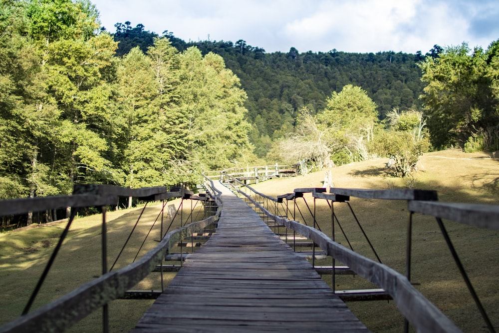 brown wooden boardwalk and green tress