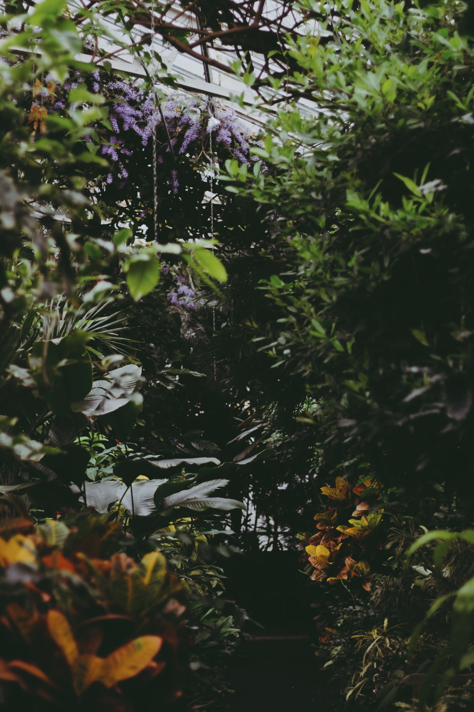 close view of green shrubs