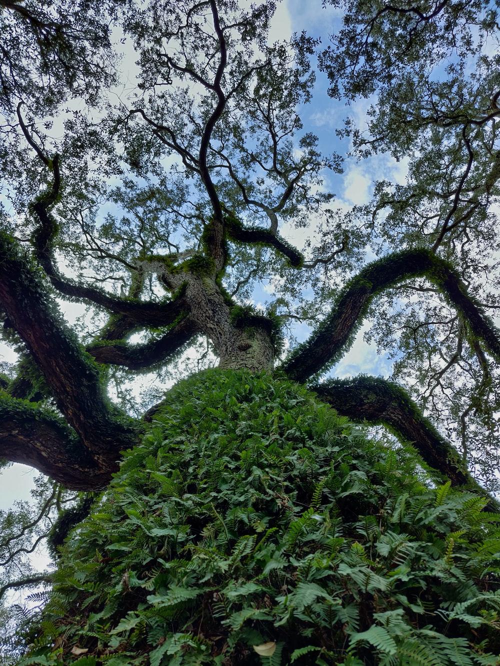 brown tree bark with moist