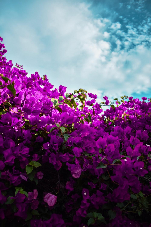 meadow purple flowers