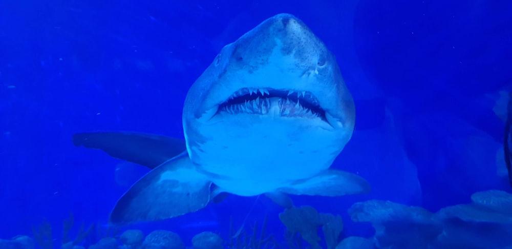 white and gray shark underwater