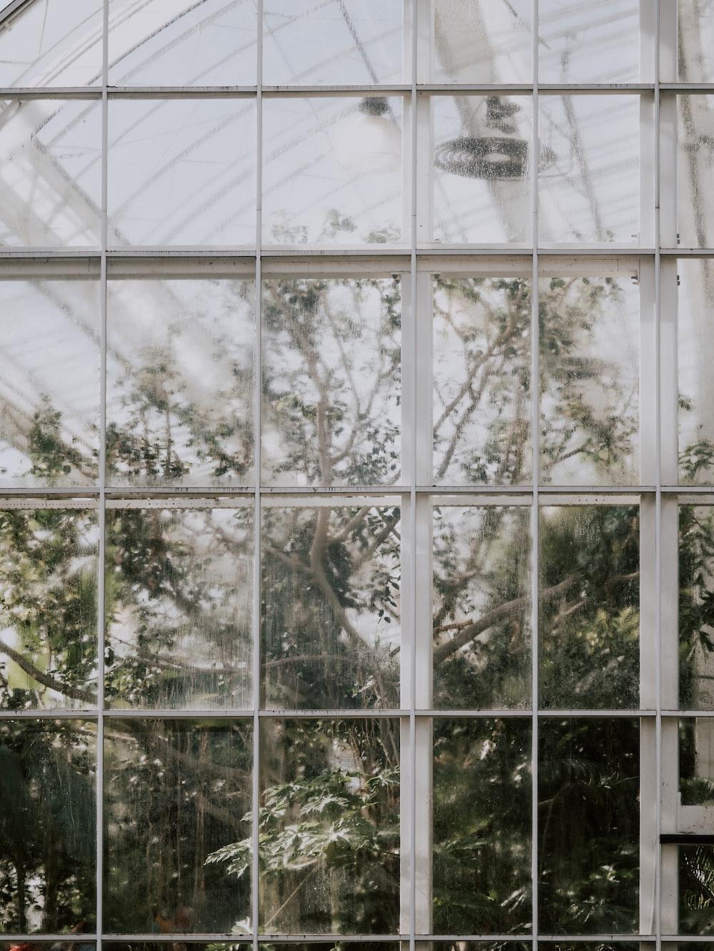 green trees near windows
