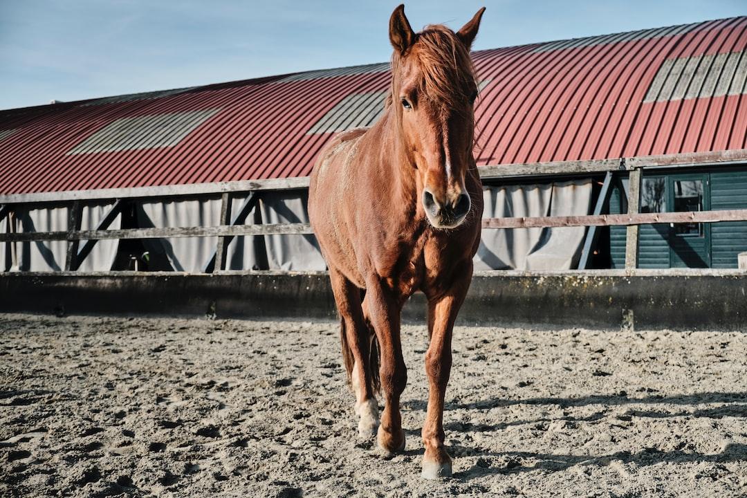 Beautiful brown horse, Amsterdam