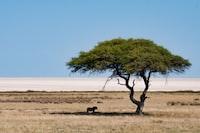 animal under green tree during daytime