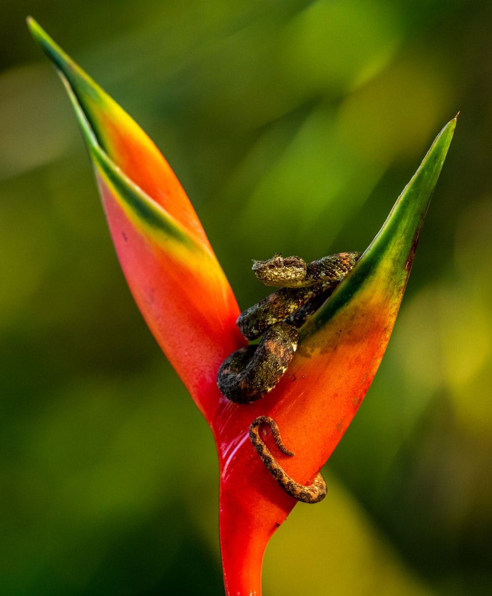 selective focus photography of snake on bird of paradise flower