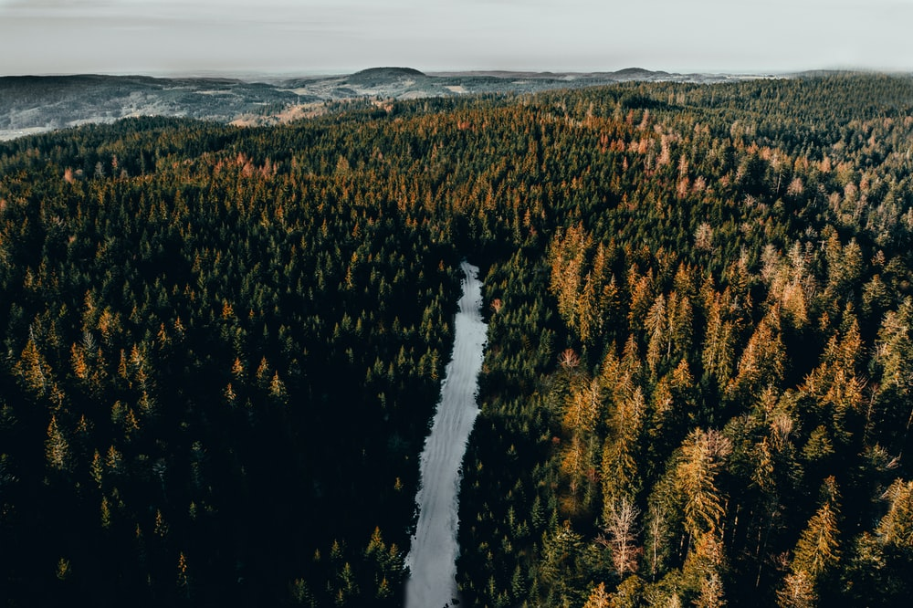 aerial view photography of lake between trees