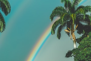 rainbow over palm trees