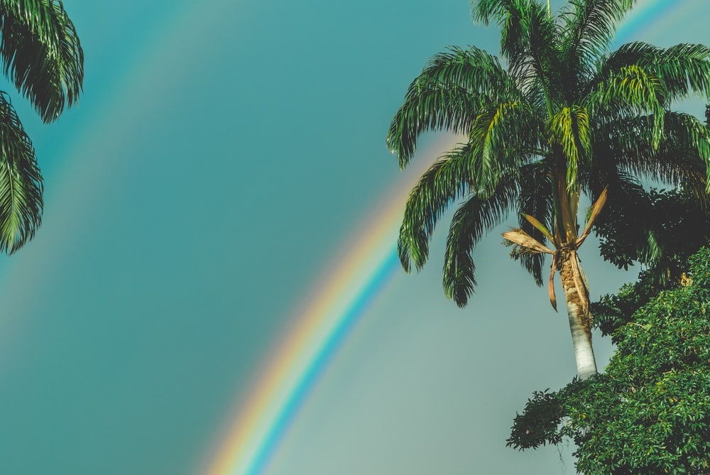 rainbow over palm trees