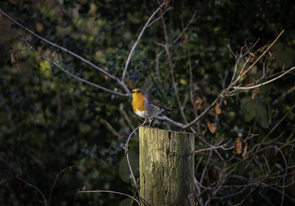 yellow bird on post