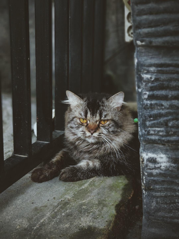 Dangerously adorable !