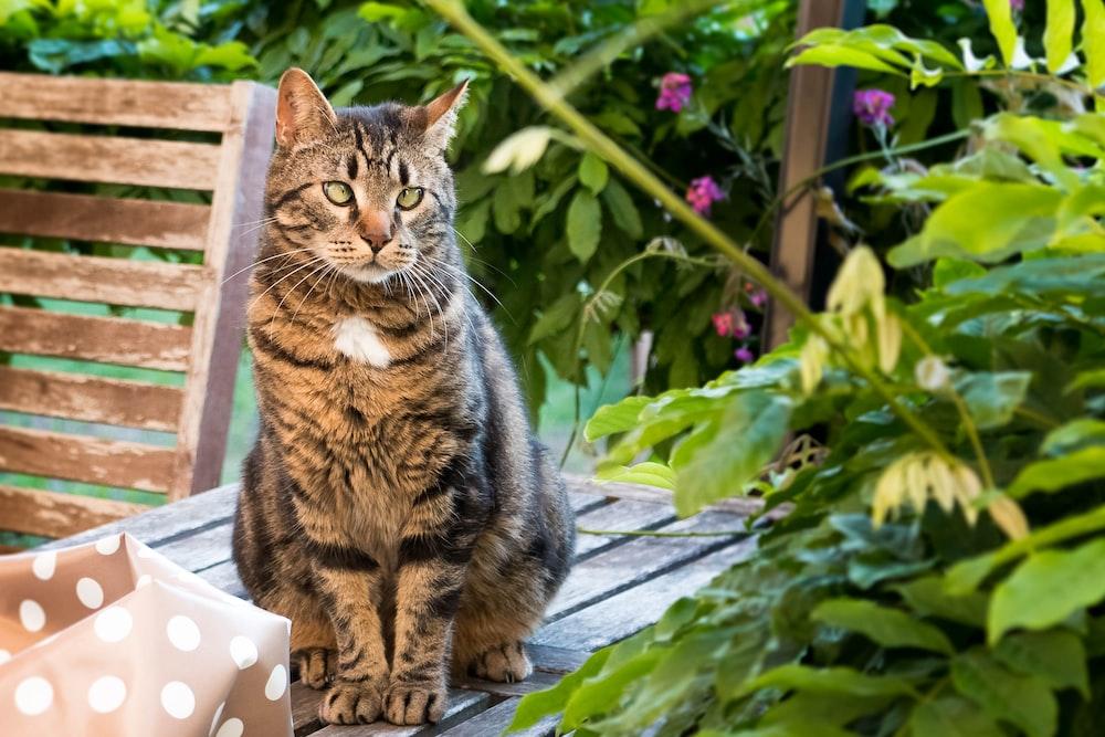 tabby cat on wood plank