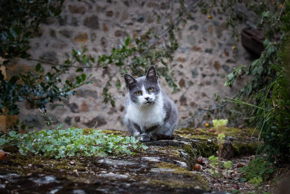silver tabby cat on grass field