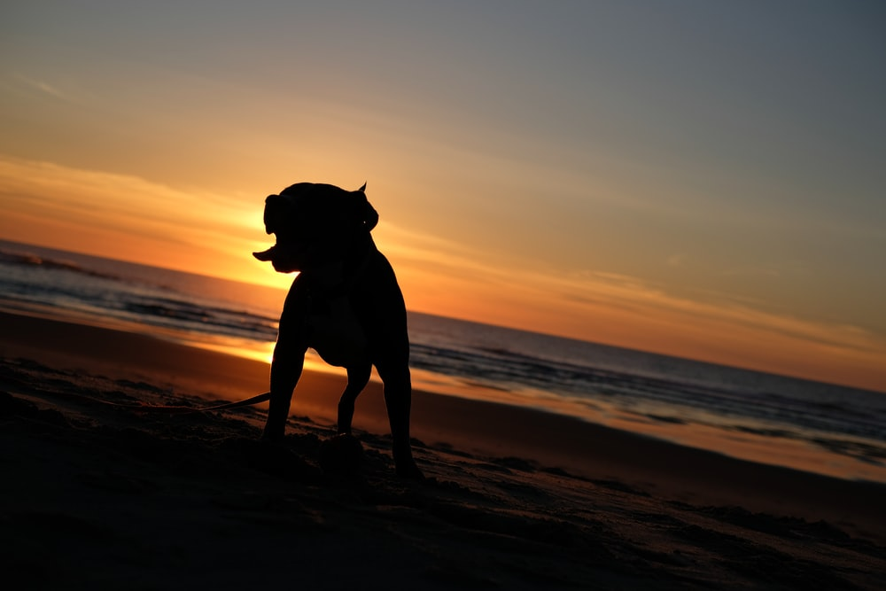 silhouette photography of dog