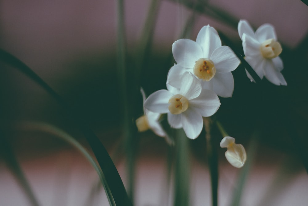 selective photo of white-petaled flowers