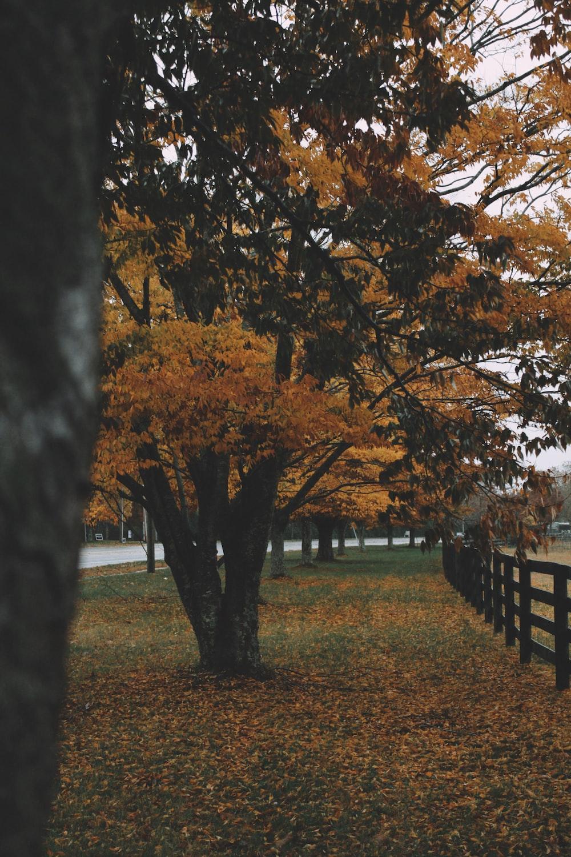 brown-leafed tree