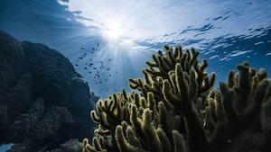 green corals under water