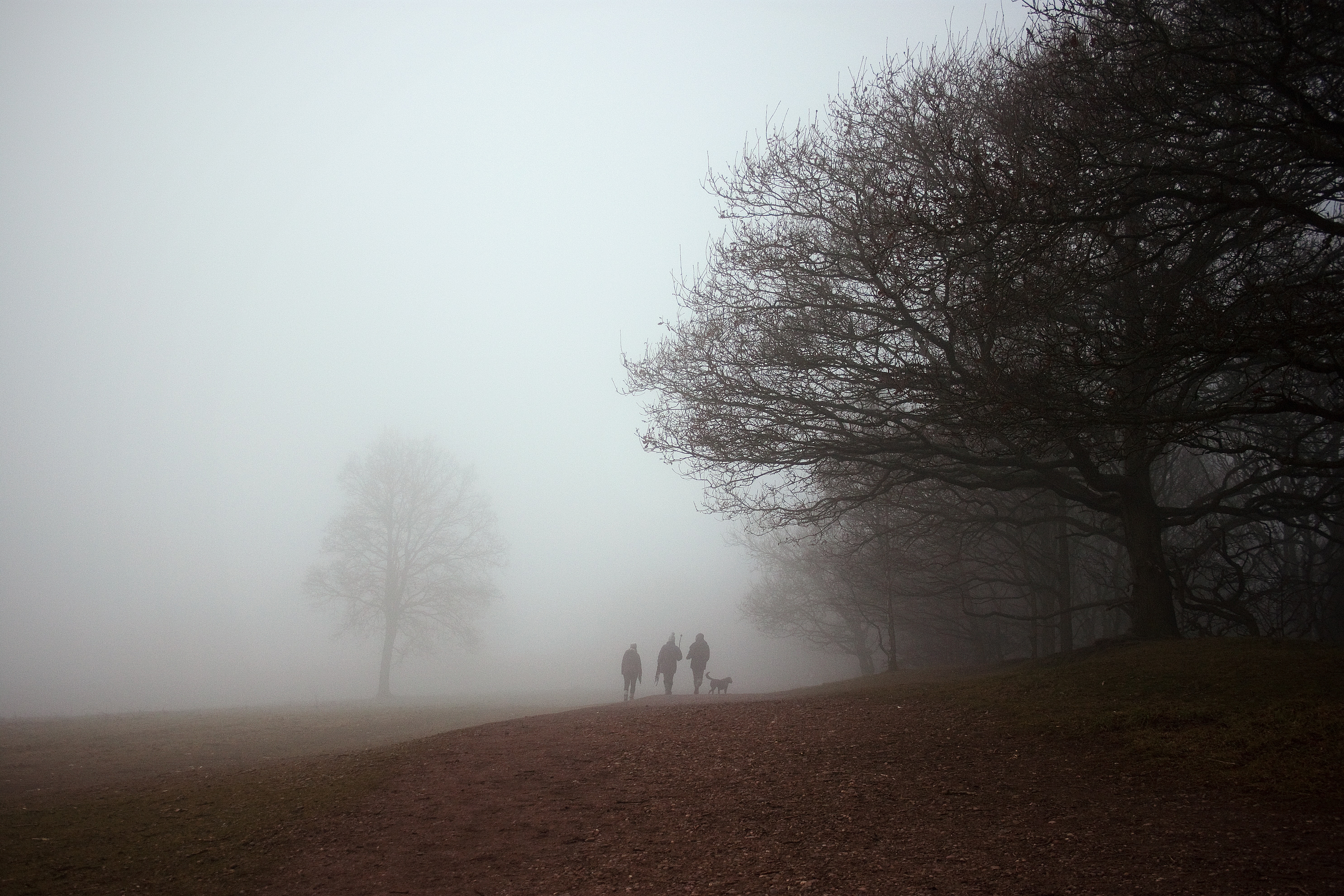 silhouette of 3 person on fog