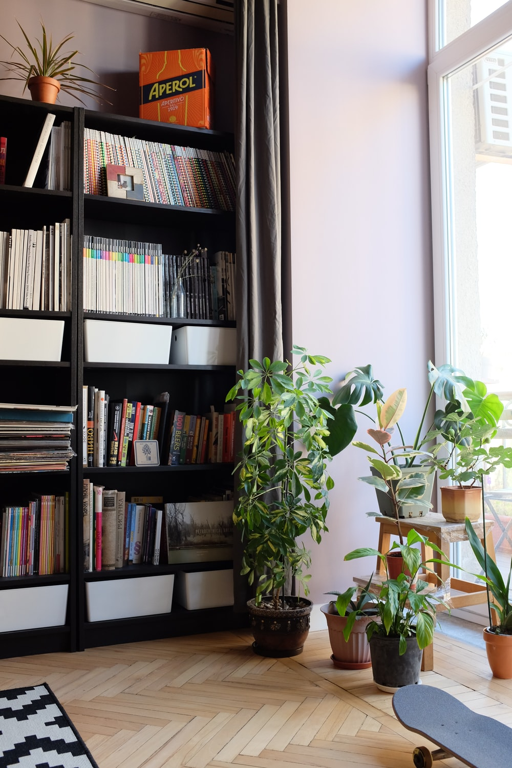 plants beside bookcase with books