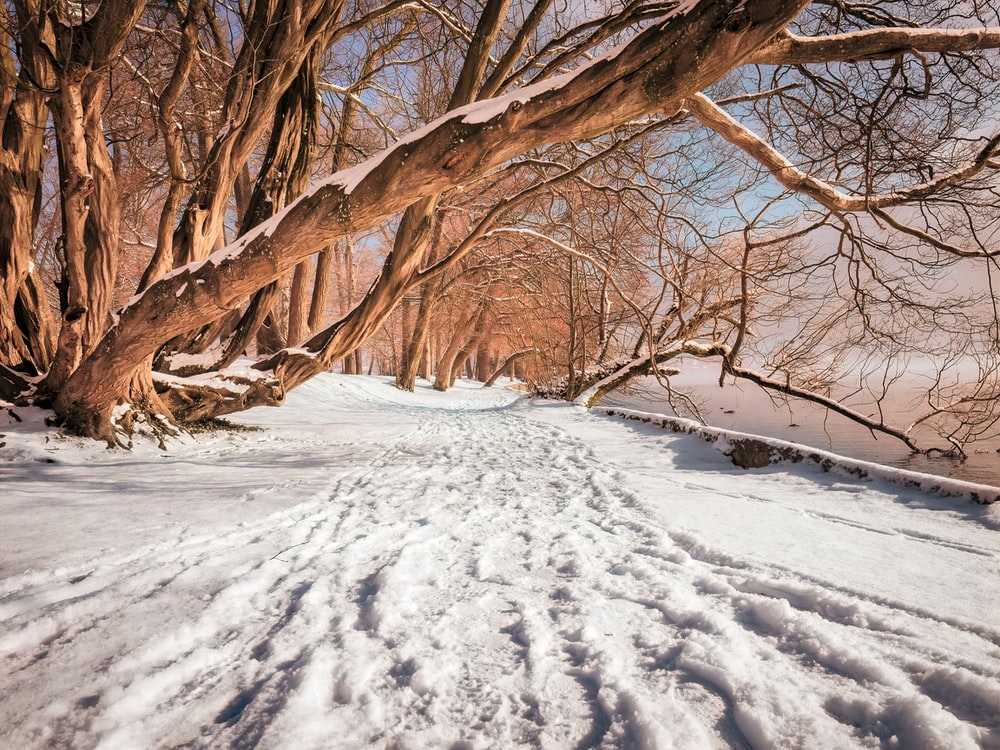 icy surface and brown tree
