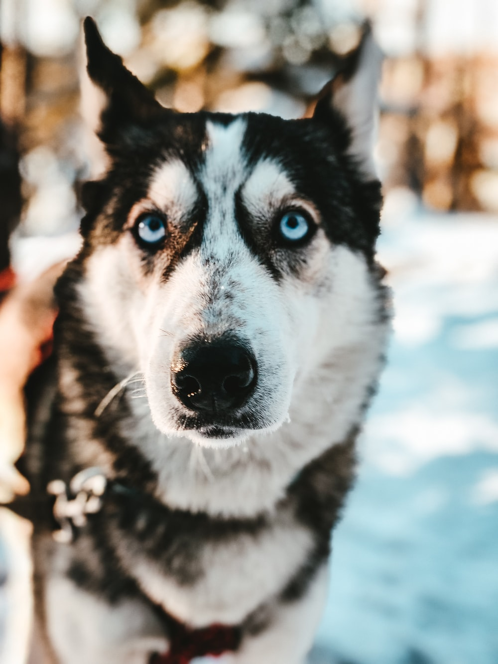 black and white dog on snow