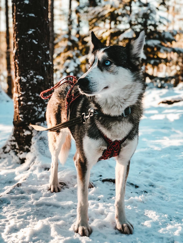 """Kiida"" posing nonchalantly in the Finnish woods."