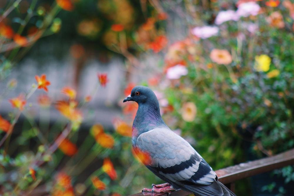 gray pigeon on railing