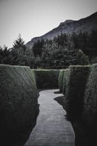 Rose's Labyrinth amusement stories