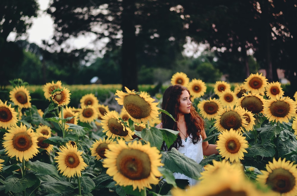 woman standing surrounded with yellow sunflowers